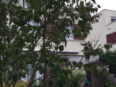 RiedbergImmobilien_Doppelhaus_ars_areal_Quartier_Ginsterhoehe_Garten