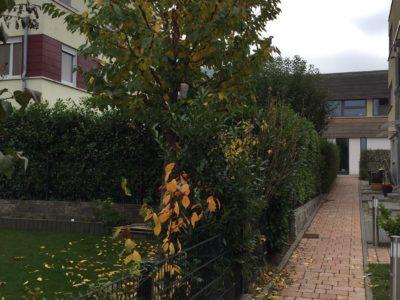RiedbergImmobilien_Doppelhaus_ars_areal_Quartier_Ginsterhoehe_Gartenweg